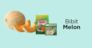 Bibit Melon
