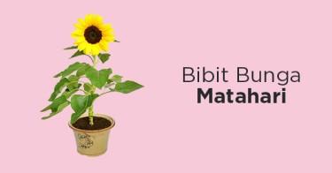 Bibit Bunga Matahari