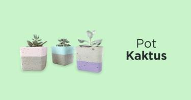 Pot Kaktus